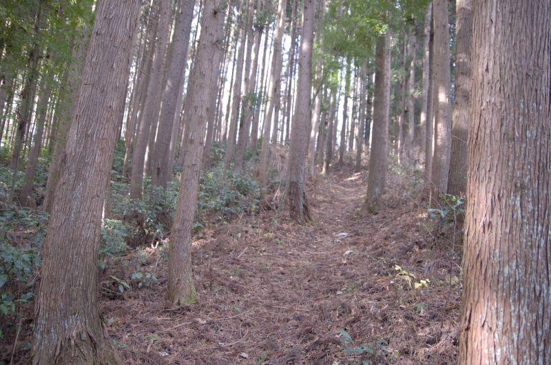 IMGP5434sugibayasi.jpg